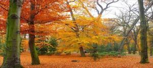 herfst-tocht
