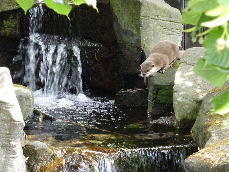 minicamper-blankenberge-zomer2018-01
